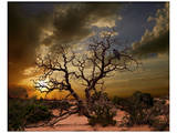 Moab Tree