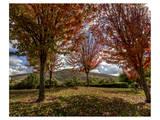 Diablo Vista Park Autum