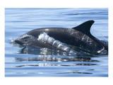 Baby Dolphin Bubbles