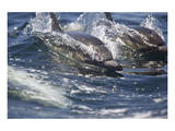 Dolphins in the Wake