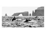 Dolphins at Anacapa Arch