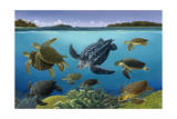 A Turtle Panorama Shows Different Aquatic Species