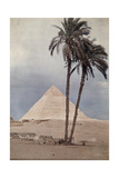 Palm Trees Stands in the Foreground of One of the Pyramids of Giza