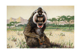 Painting of a Male Mandrill  Papio Sphinx