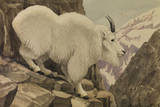 A Painting of a Rocky Mountain Goat Standing on a Rocky Cliff Ledge