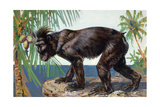 Painting of a Rare Crested Black Macaque  Celebes Black Ape