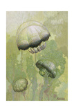 Painting of Several Stomolophus Meleagris Jellyfish