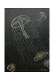 A Painting of Two Species of Deep Water Jellyfish