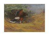 A Painting of a Harris's Hawk Killing a Rabbit