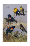 Blackbirds and Orioles Perched on Twigs Near Water