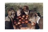 Four Boys Bob for Apples