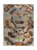 Collection of Various Little Moths