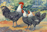 Three Silver Campine Chickens Originally from Beligum's Campine Region