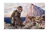 Painting of Barbary Apes  or Macaques  in a Rock of Gibraltar Setting