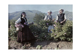 Girls Pick Rose Blossoms for Distilling into World-Famous Oil