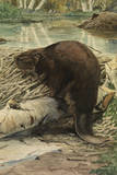 A Painting of an American Beaver Sitting on a Freshly Gnawed Log