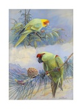 A Painting of a Carolina Parakeet and a Thick-Billed Parrot