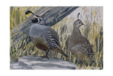 A Painting of a Pair of Quail