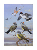 A Painting of Several Kingbirds and a Scissor-Tailed Flycatcher