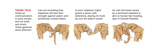 Illustration of Elephants Communicating by Touch with their Trunks