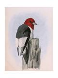 A Painting of a Red-Headed Woodpecker Perched on a Tree Stump