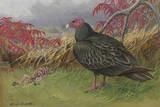 Painting of a Turkey Vulture Standing Beside a Skeleton