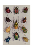 A Group of Scarabs from the Scarabaeid Family