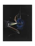 Two Deep Seat Creatures Swim around the Bathysphere