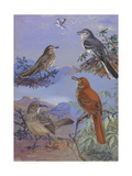 A Painting of a Mockingbird  Sage Thrasher  and Curve-Billed Thrasher