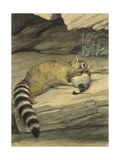 A Ring-Tailed Cat Stands with Paw on it's Prey  a Quail