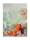 A View of Poisonous Sea Anemones