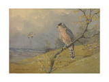 A Painting of a Cooper's Hawk Perched on a Branch