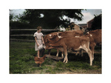A Girl Feeds Calves on a Pennsylvania Dutch Farm