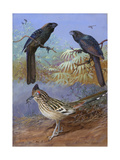 A Painting of a Smooth-Billed Ani  Groove-Billed Ani and a Roadrunner