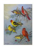 A Painting of a Pyrrhuloxia and Two Species of Tanager