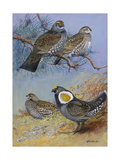A Painting of Mating Pairs of Two Different Species of Grouse