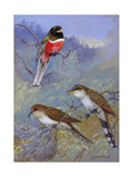A Painting of Two Species of Cuckoo and a Coppery-Tailed Trogon
