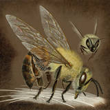 A Painting of an African Bee Injecting its Poison