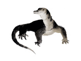 A Water Monitor Lizard