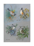 A Painting of Several Species of Titmouse