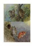 A Painting of Two Species of Screech Owl Perching in Trees