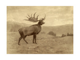 A Painting of an Irish Elk of the Pleistocene Era