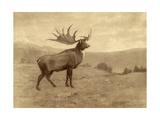 A Painting of an Irish Elk of the Pleistocene Era