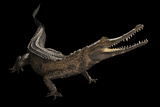 A Federally Endangered African Slender Snouted Crocodile  Mesistops Cataphractus