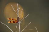 A Dragonfly Perched on a Tree Branch Laced with Spider Webs