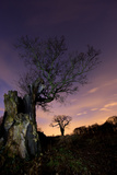 Two Large Oak Trees at Night in Richmond Park