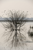 A Flock of Birds Flying around and Perching in a Tree in the Middle of a Body of Water