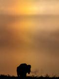 A Buffalo and Sundog or Parhelion  a Rainbow in Atmospheric Ice Crystal on Each Side of the Sun