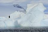 A Lone Cormorant Sitting on an Iceberg