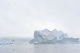 A Large Iceberg in a Foggy Antarctic Seascape